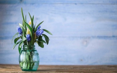 5 Spring tips to make your Canberra home shine